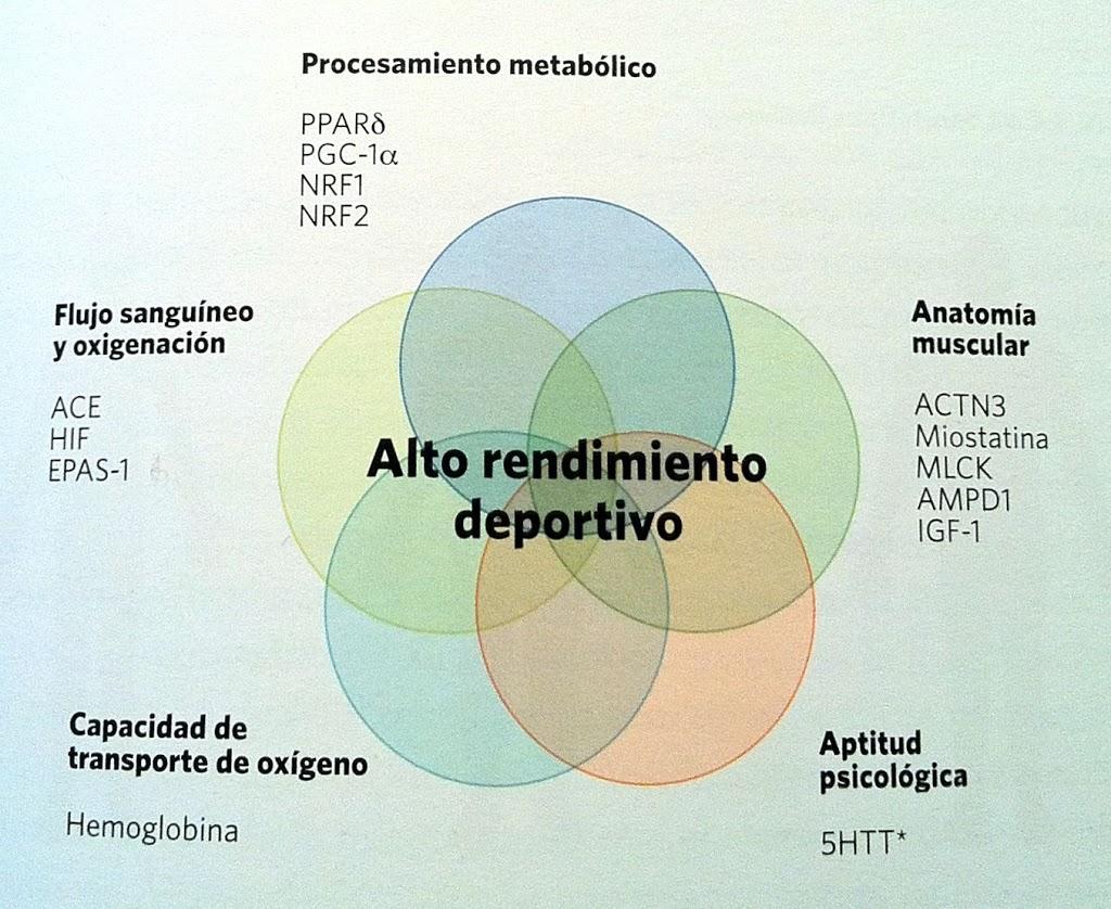 Rendimiento deportivo y nutrigenómica - AD Dietistas
