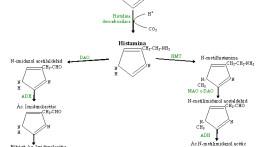 histamina1